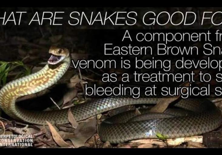 eastern brown snake.jpg