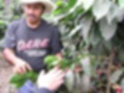 コーヒー豆生産者
