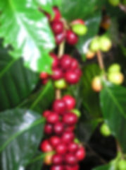 cafemaduro.JPG