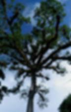 エルミラドール ティカル遺跡 グアテマラ