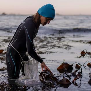 The Seaweed Hunters
