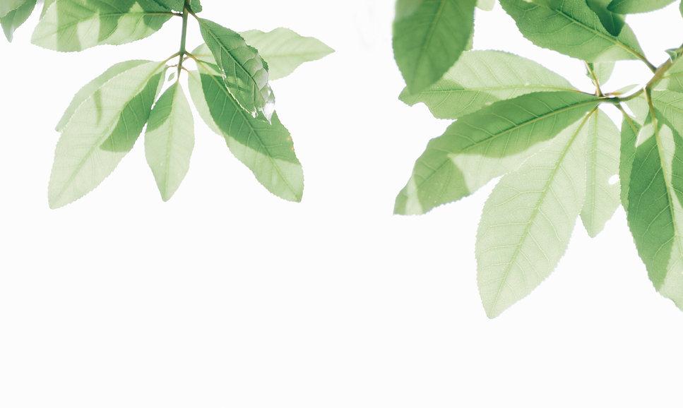 branch-bright-freshness-1353938.jpg