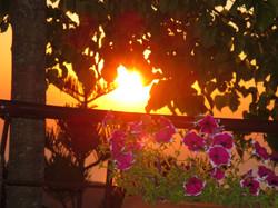 fiori-tramonto-cilento