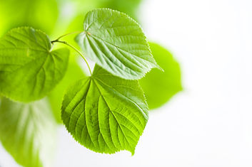 fresh-green-leaves-natural-background-TW