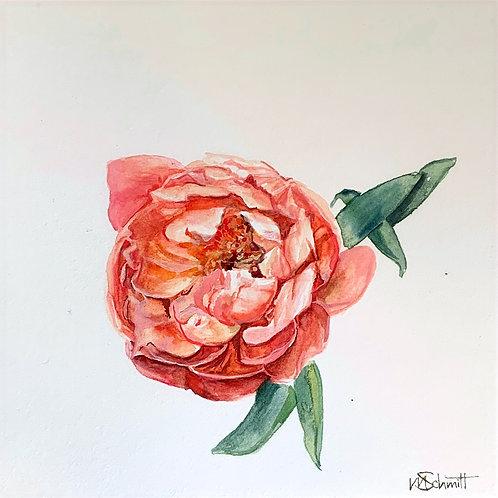 Watercolor Peony 6x6