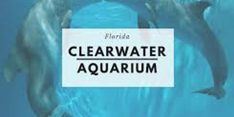 Juniors - Clearwater Aquarium Overnight