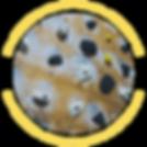 Moon Board.png