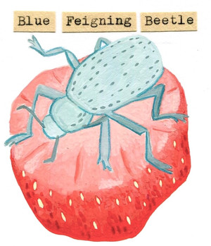 Blue Feigning Beetle
