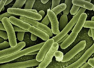 Bakterie ve vodě, koliformní bakterie, e coli