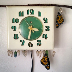 Instagram - My kitchen clock is not the same without the bright green chrysalis
