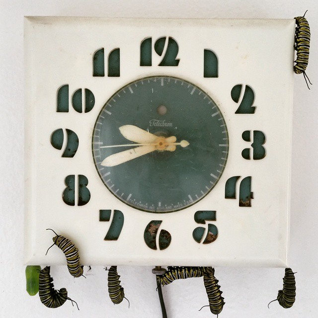 Instagram - What time is it? It's caterpillar time! On the clock: one already in