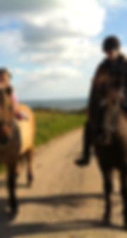 Guidede tore på islandsk heste
