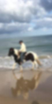 Guidede ture på isalndske heste