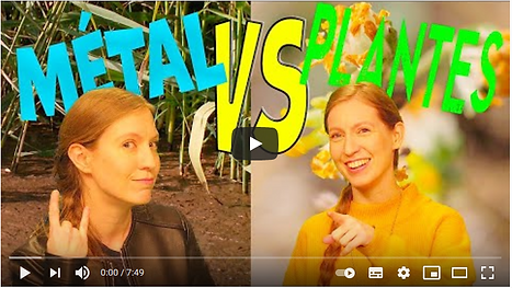 METAL versus PLANTES.png