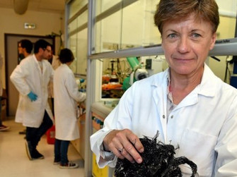 Montpellier : plantes dépolluantes, le laboChimEco innove pour la planète