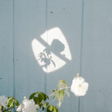 A flower shade