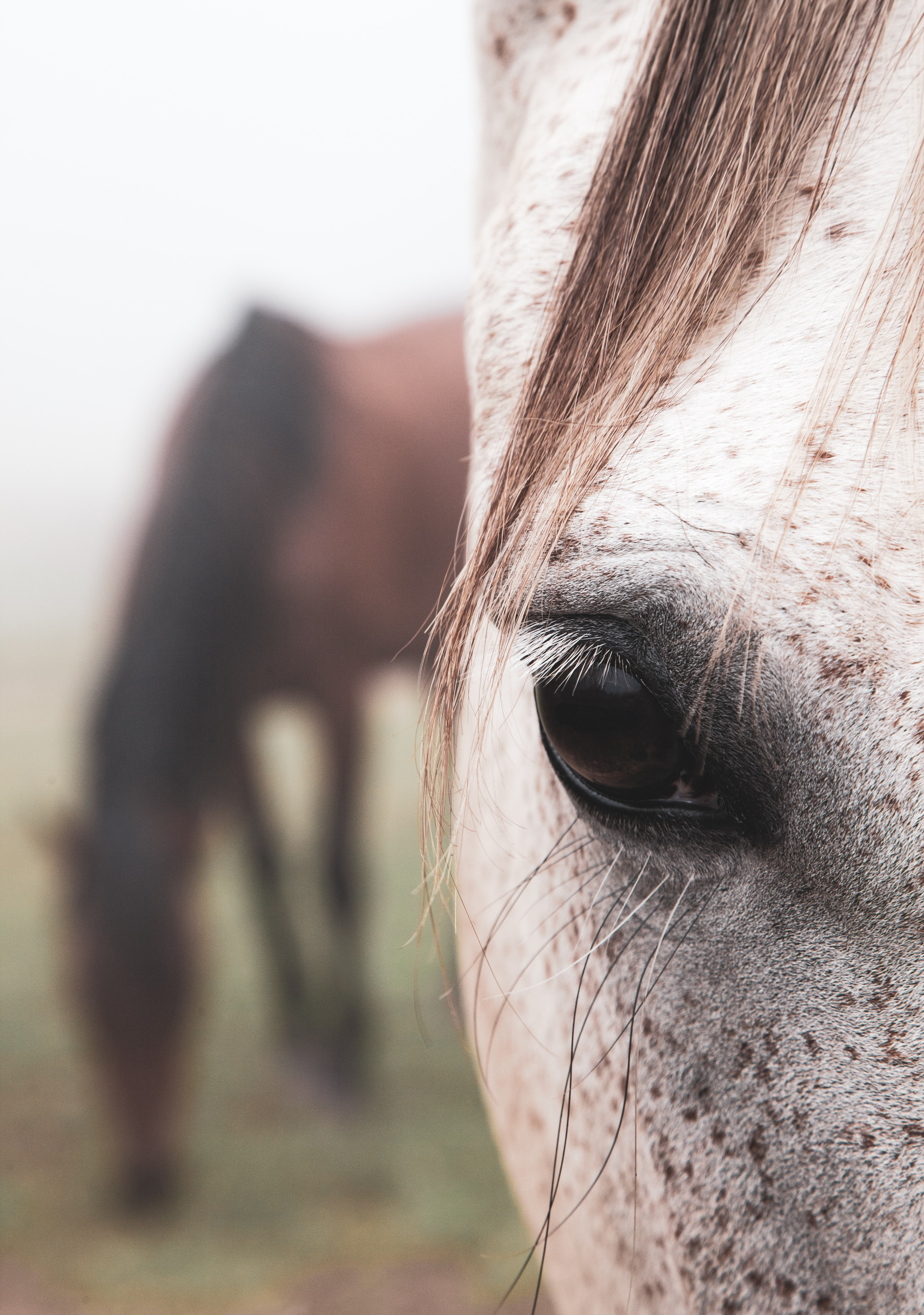 Homeopathic Coaching For Horse Owners