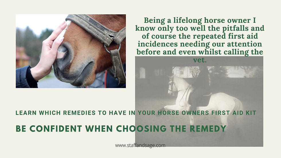 Homeopathic First Aid Coaching For Horse Owners