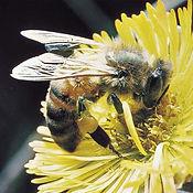 Pest control sutton coldfield,pest control birmingham