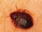 pest control birmingham