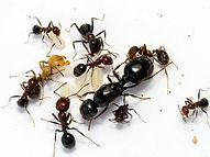 Ants problem