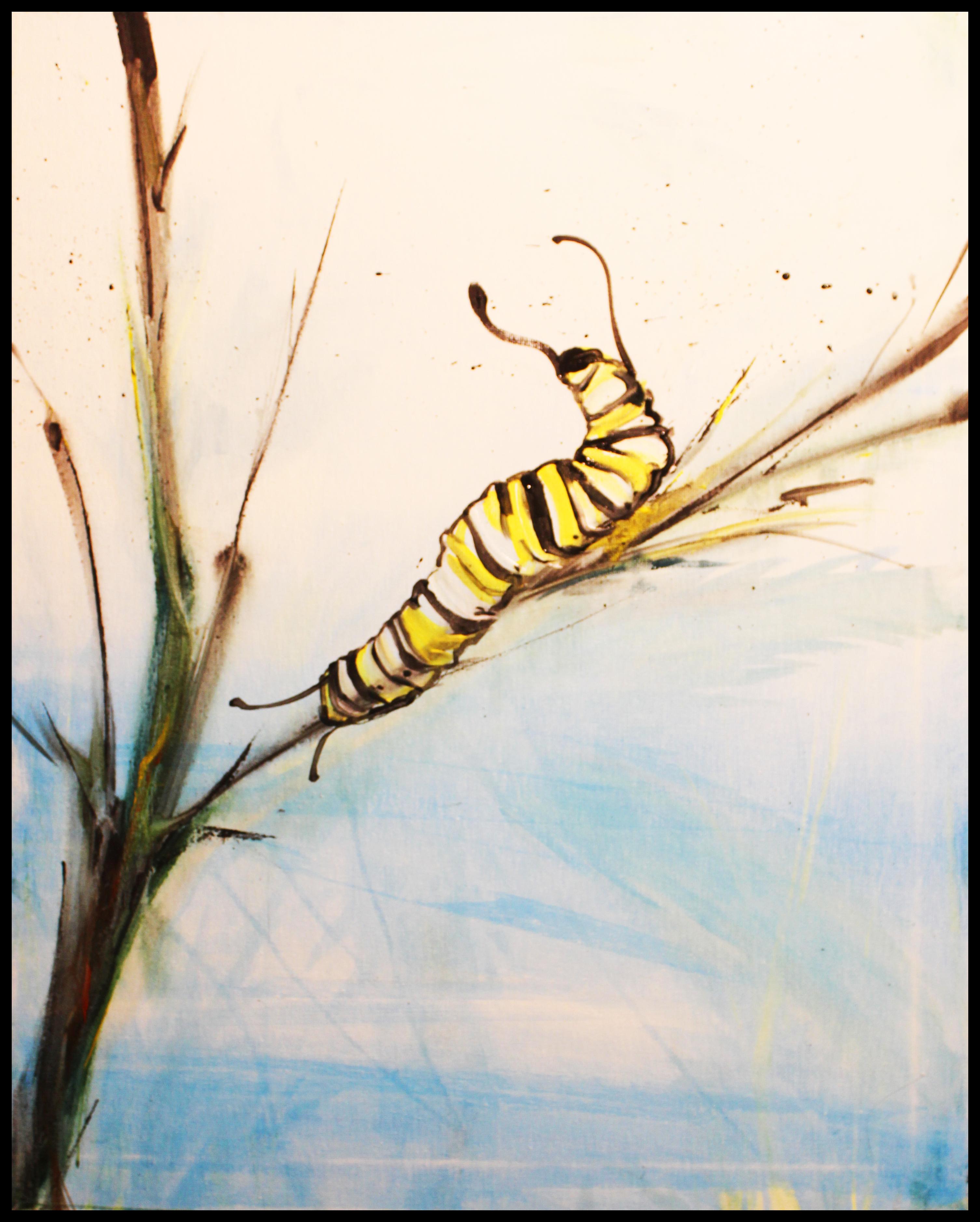 spring caterpillar 3
