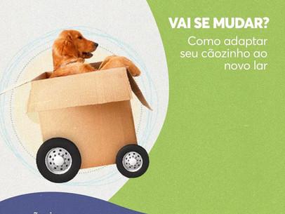 Descubra como adaptar seu cãozinho ao novo lar!