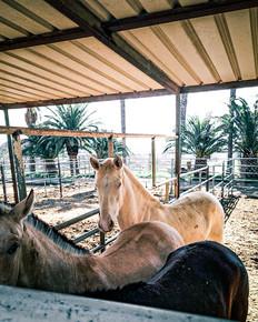 Wedding venue horses
