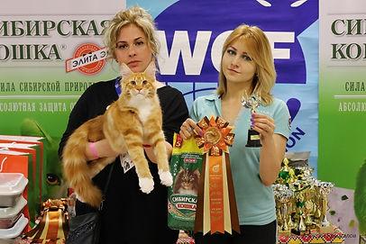 Болдина Светлана - Заводчик кошек породы мейн кун