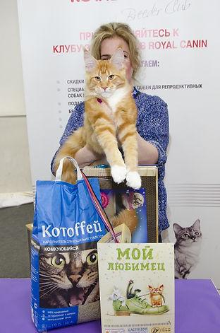 котенок мейн кун 4,5 месяца Delius Line Ilarsson