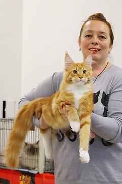эксперт WCF Наталья Белова и котёнок мейн кун  Ларс (5 месяцев)