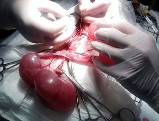 обязательная стерилизация кошек