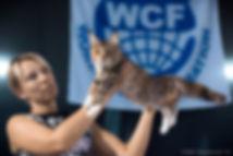 эксперт WCF Игнатова Елена и котенок мейн кун HoneyDevil Wincenta