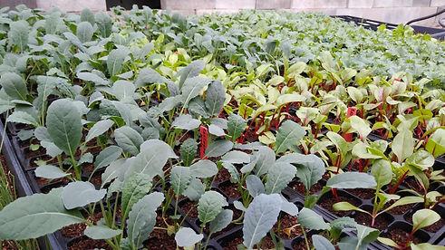 Seedlings at Four Winds Farm.jpg