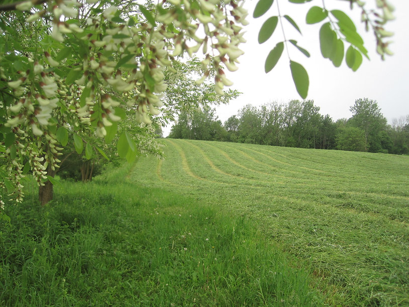 2018-05-28 1st cutting hay and bl locust