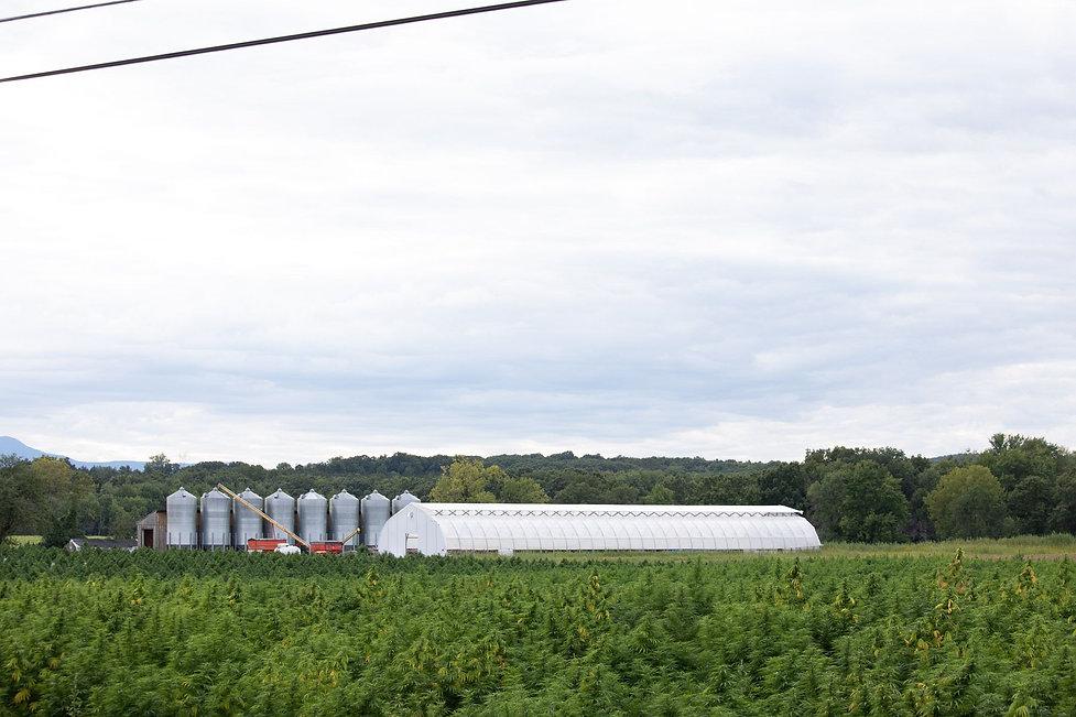 grain bins & greenhouse & hemp.jpeg