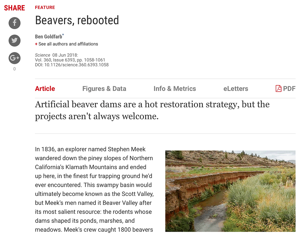 Beavers, rebooted in Science