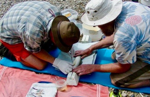 cutthroat trout genetic sample biologial data eco logical research
