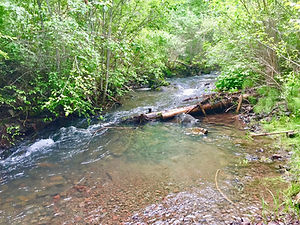 Asotin Creek Washington Steelhead Restoration