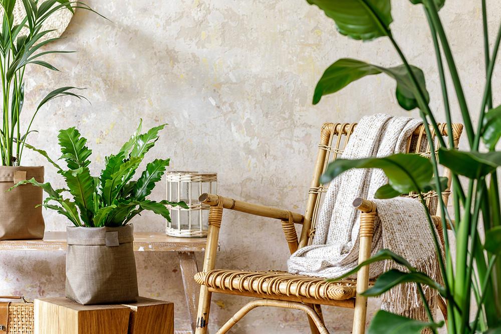 Ambiente rústico com parede na cor bege, cadeira artesanal e plantas.