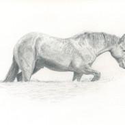 Le cheval au bain
