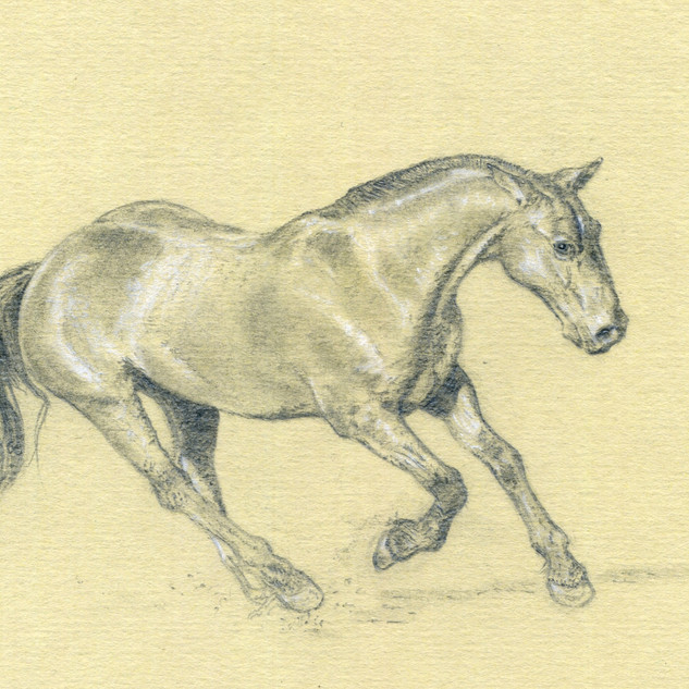 Le cheval au galop