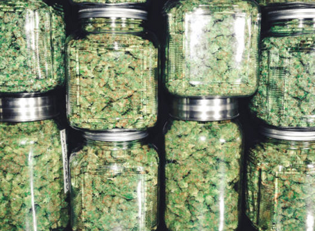 Discover the Difference Between Indica & Sativa