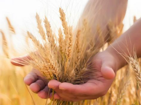 Председатель правительства РФ Михаил Мишустин утвердил план реализации стратегии зернового комплекса