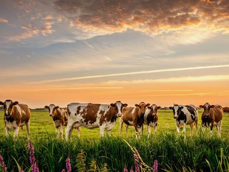 Освобождение от налога на добавленную стоимость (НДС) племенной животноводческой продукции.