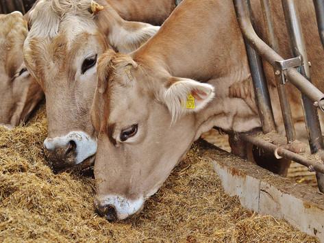 Перспективы развития молочного животноводства в Рузаевском районе