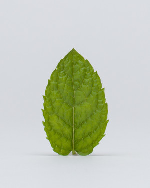 Rethos - Peppermint