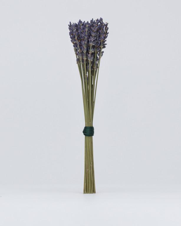 Rethos - Lavender
