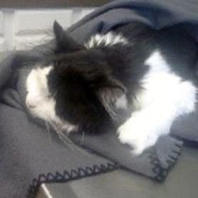 Pet Mortality Planning