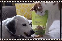 dogs love Domino's Dominos dog treats